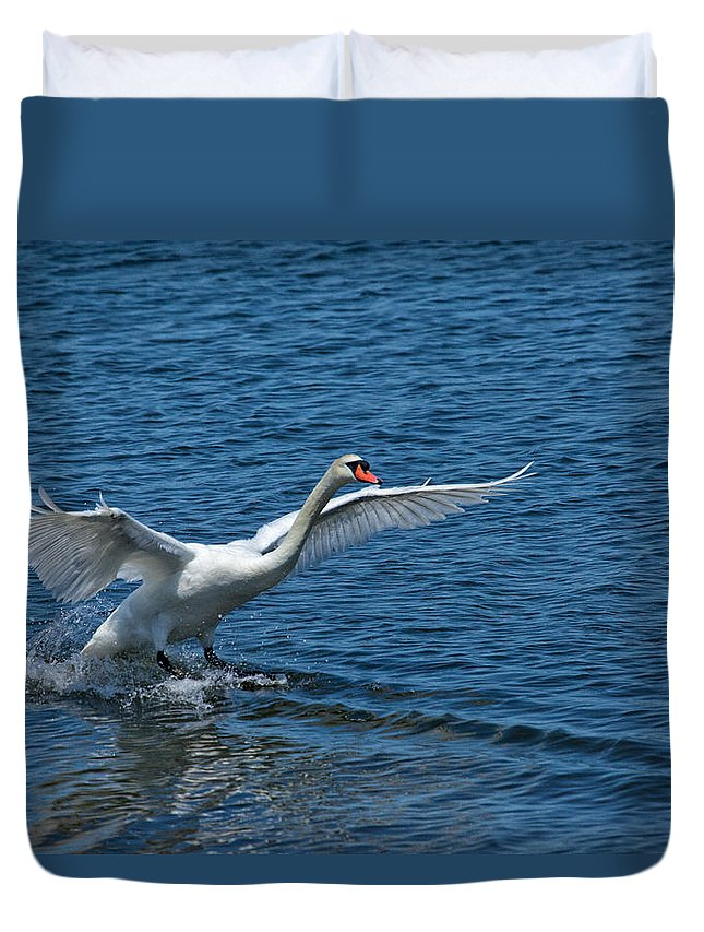 Swan Duvet Cover featuring the photograph Clean Landing by Karol Livote