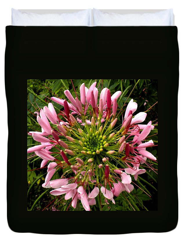 Cleome Duvet Cover featuring the painting Cleome by Renate Nadi Wesley