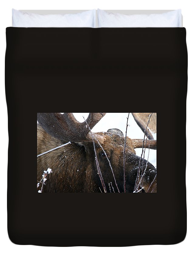 Alaska Duvet Cover featuring the photograph Close by Doug Lloyd