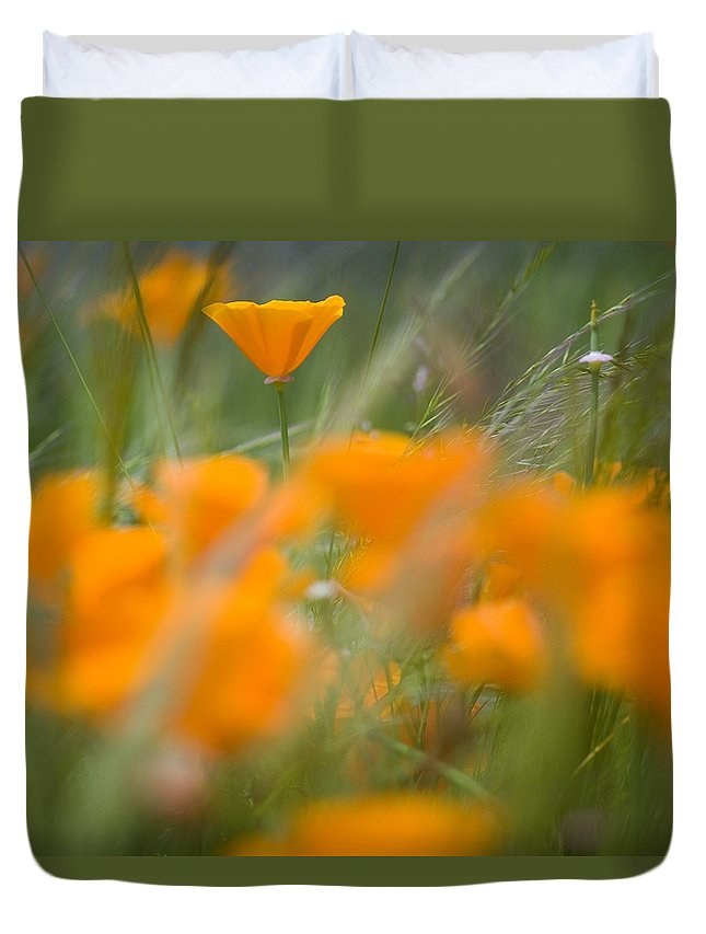 Color Duvet Cover featuring the photograph Close Up Of Orange Poppy Flowers by Craig Tuttle