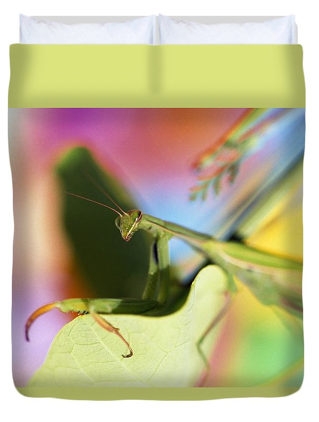Outdoors Duvet Cover featuring the photograph Close-up Of Praying Mantis by Natural Selection Craig Tuttle