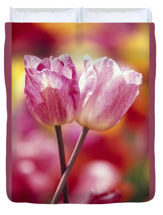 Plant Duvet Cover featuring the photograph Close-up Of Tulips by Natural Selection Craig Tuttle