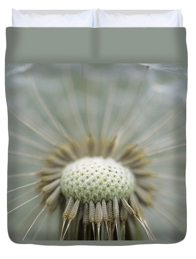 Light Duvet Cover featuring the photograph Closeup Of Dandelion Seed Head by Darwin Wiggett