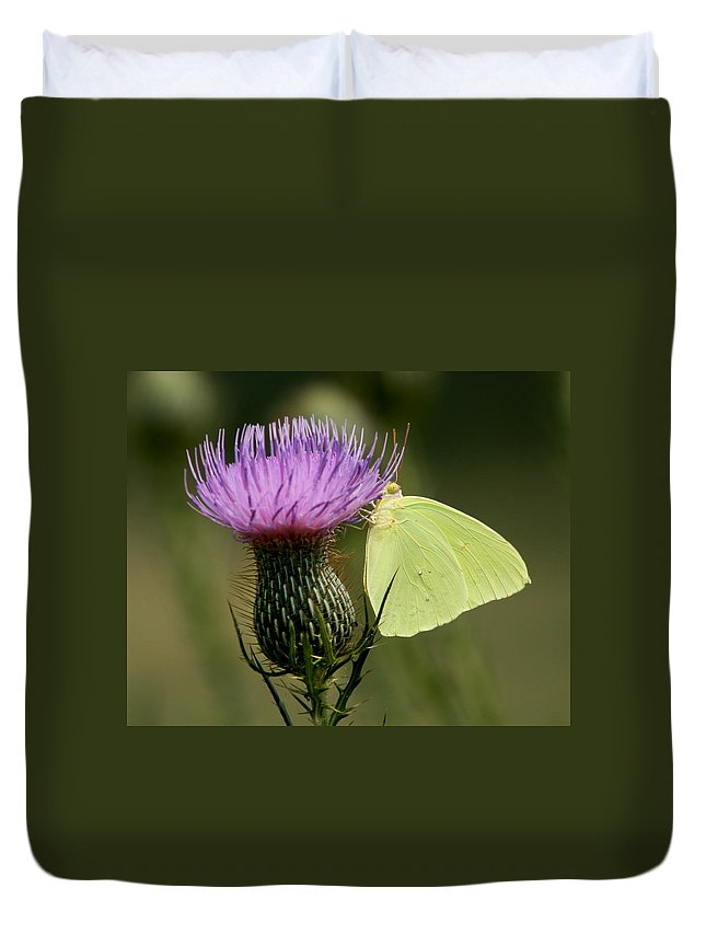 Phoebis Sennae Duvet Cover featuring the photograph Cloudless Sulfur Butterfly On Bull Thistle Wildflower by Kathy Clark