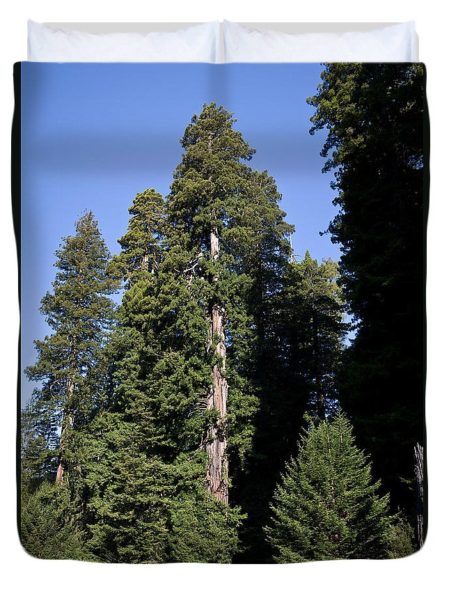 Plant Duvet Cover featuring the photograph Coast Redwood by Gregory G Dimijian MD