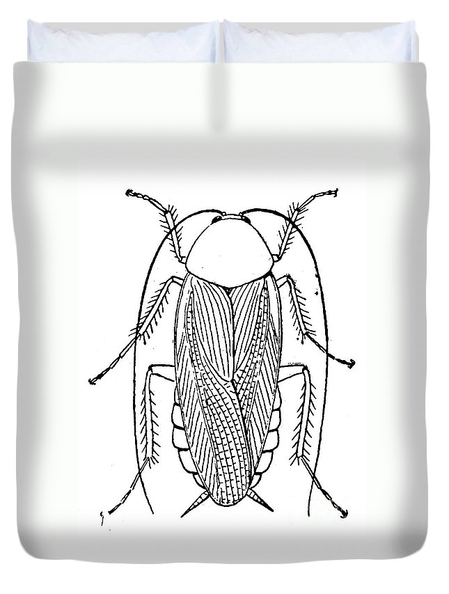 Animal Duvet Cover featuring the photograph Cockroach by Granger