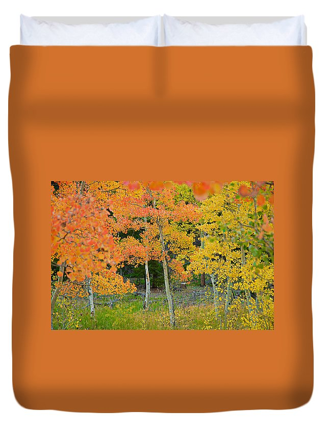 Aspens Duvet Cover featuring the photograph Colorado Aspens Bejeweled by Robert Meyers-Lussier