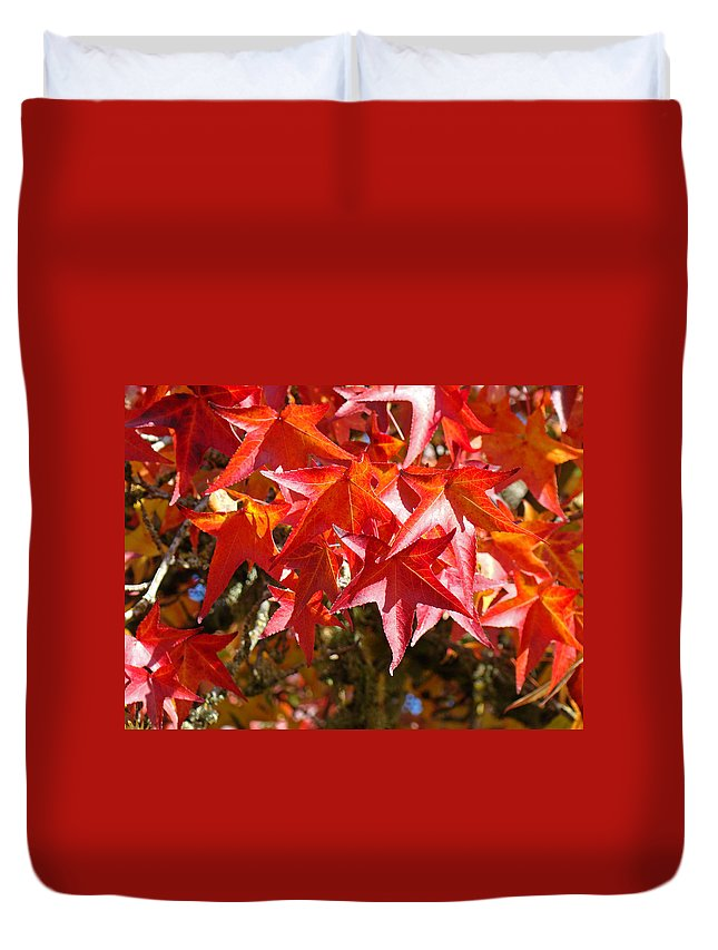 Autumn Duvet Cover featuring the photograph Colorful Fall Tree Red Leaves Art Prints by Baslee Troutman
