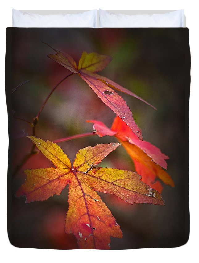 Autumn Duvet Cover featuring the photograph Colors by Karol Livote