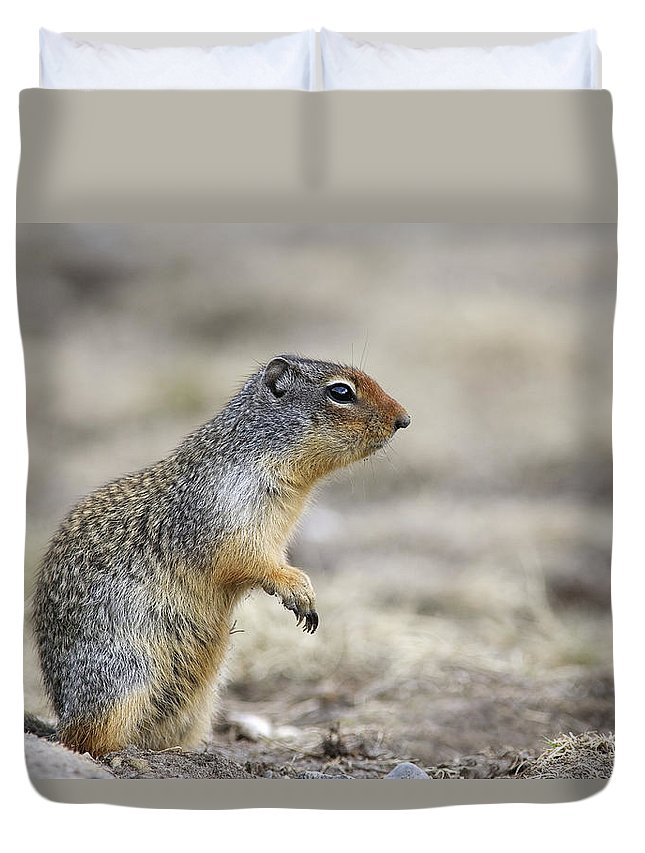 Light Duvet Cover featuring the photograph Columbian Ground Squirrel, Banff by Darwin Wiggett