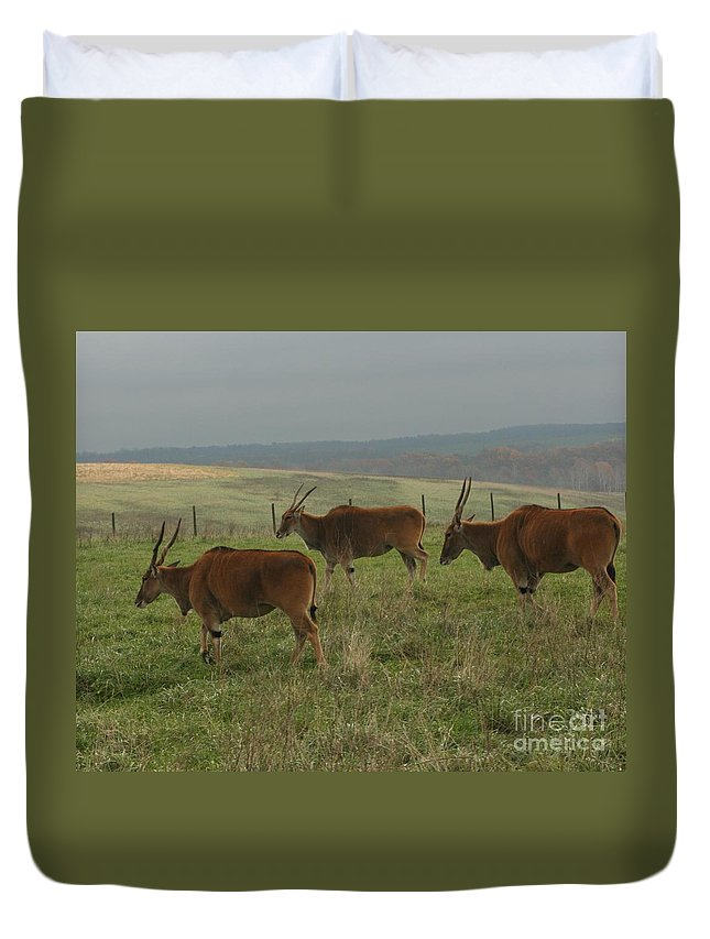 Wildlife Duvet Cover featuring the photograph Common Eland 3 by Dawn Downour