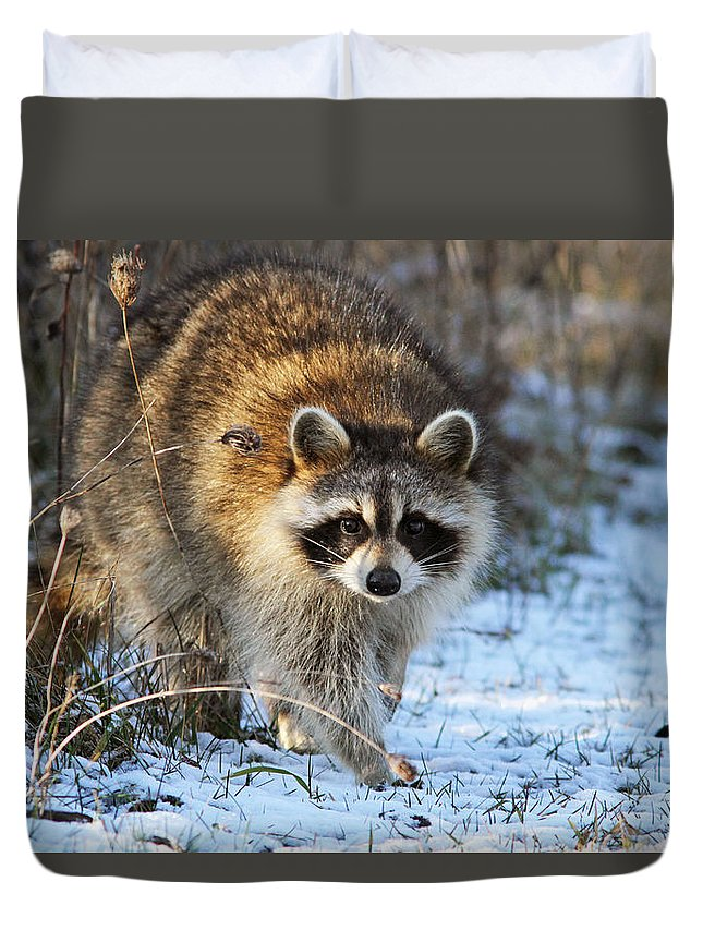 Banditos Duvet Cover featuring the photograph Common Raccoon by Mircea Costina Photography