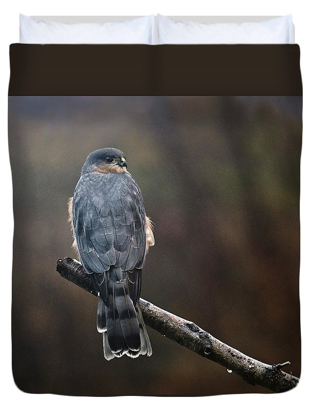 Hawk Duvet Cover featuring the photograph Coopers Hawk by Susan Capuano