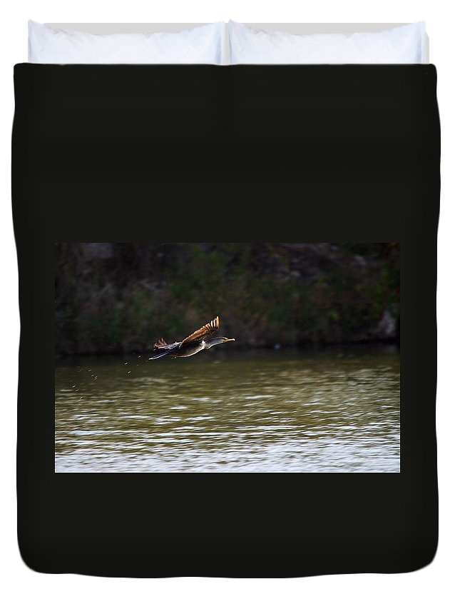 Bird Duvet Cover featuring the photograph Cormorant Flight Series - 1 by Roy Williams