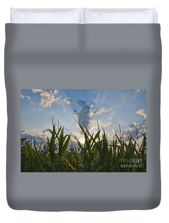 Corn Duvet Cover featuring the photograph Cornlight by David Arment
