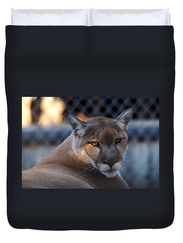Roy Williams Duvet Cover featuring the photograph Cougar Portrait - Sad Eyes by Roy Williams