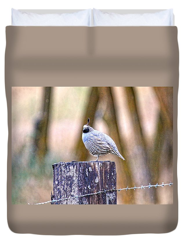 Quail Duvet Cover featuring the photograph Country Quail by Steve McKinzie