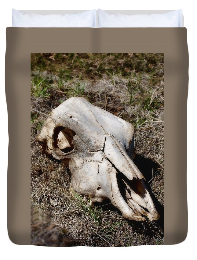 Skull Duvet Cover featuring the photograph Cow Skull by Donna Greene