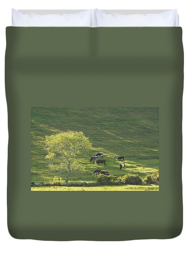Cow Duvet Cover featuring the photograph Cows On Hillside Summer In Maine by Keith Webber Jr