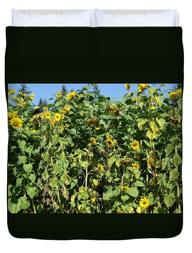 Sunflowers Duvet Cover featuring the photograph Crows In The Sunflowers by Kym Backland