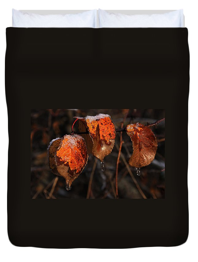 Water Drops Duvet Cover featuring the photograph Cusp Of The Seasons by Susan Capuano