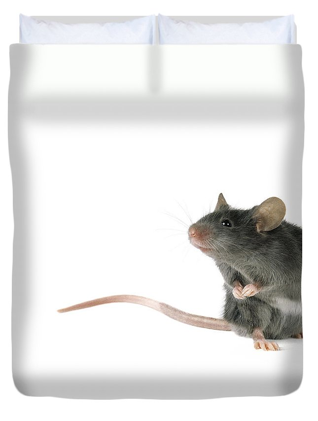 Light Duvet Cover featuring the photograph Cute Mouse by Darwin Wiggett