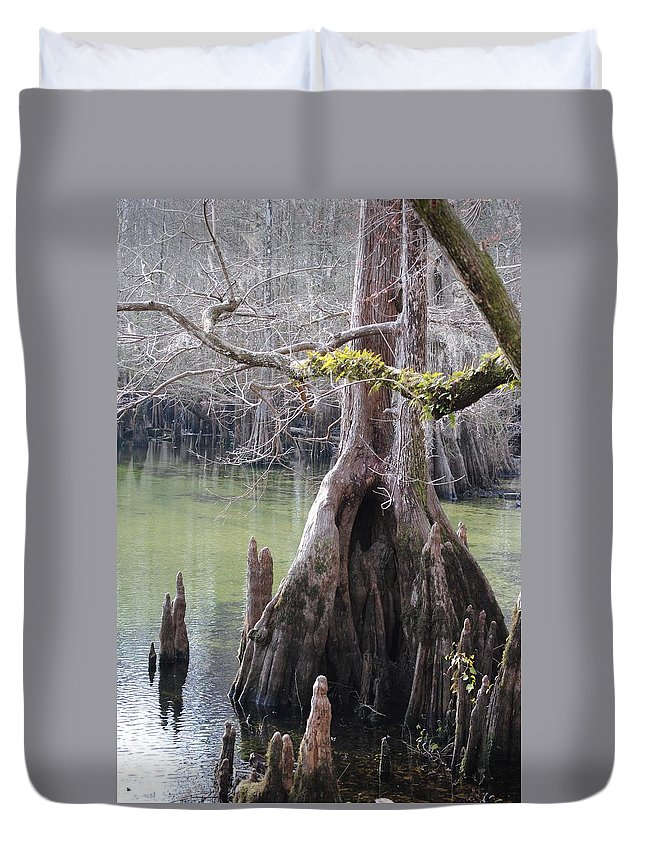 Morrison Springs Duvet Cover featuring the photograph Cypress Stump #1 by Charlie Day