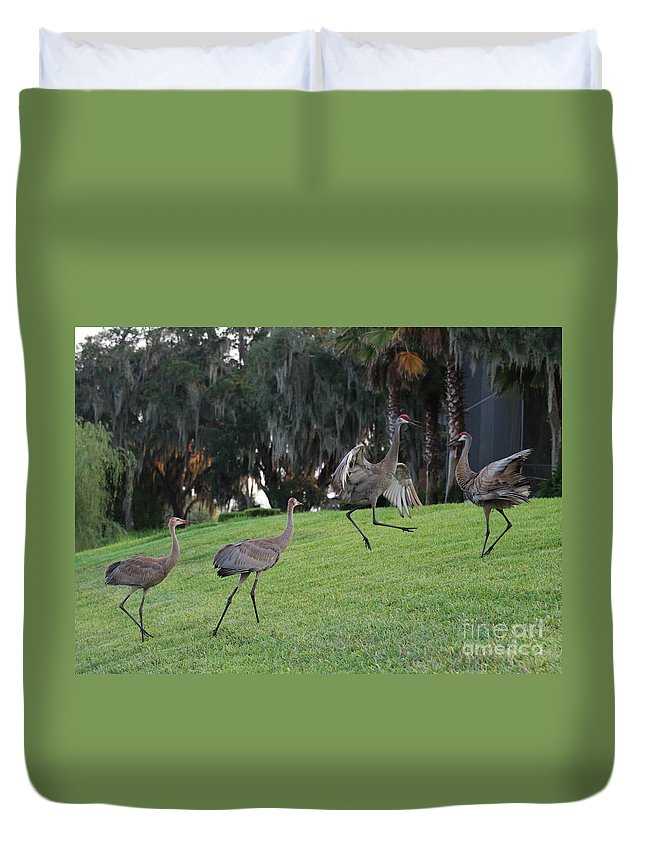Sandhill Cranes Duvet Cover featuring the photograph Dad's Showing Off by Carol Groenen