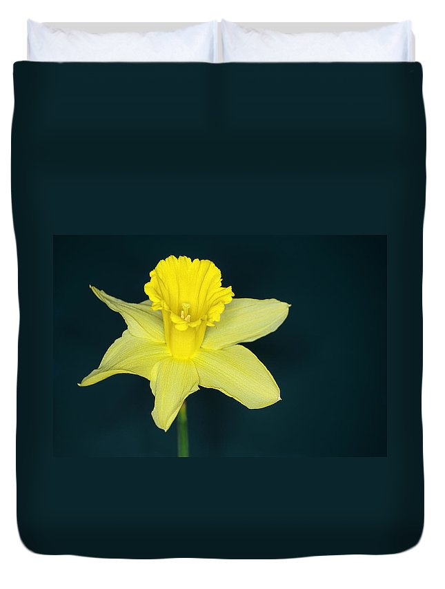 Daffodil Duvet Cover featuring the photograph Daffodil by Chris Day