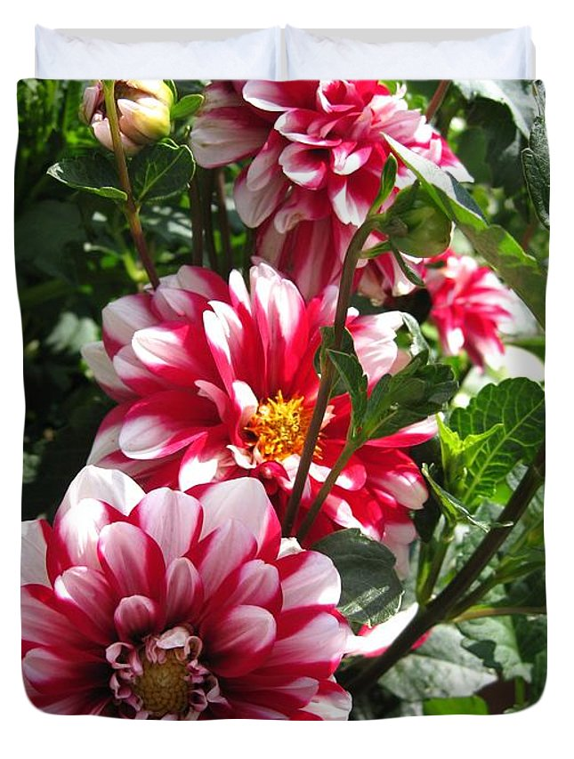 Dahlia Duvet Cover featuring the photograph Dahlia Named Yoro Kobi by J McCombie