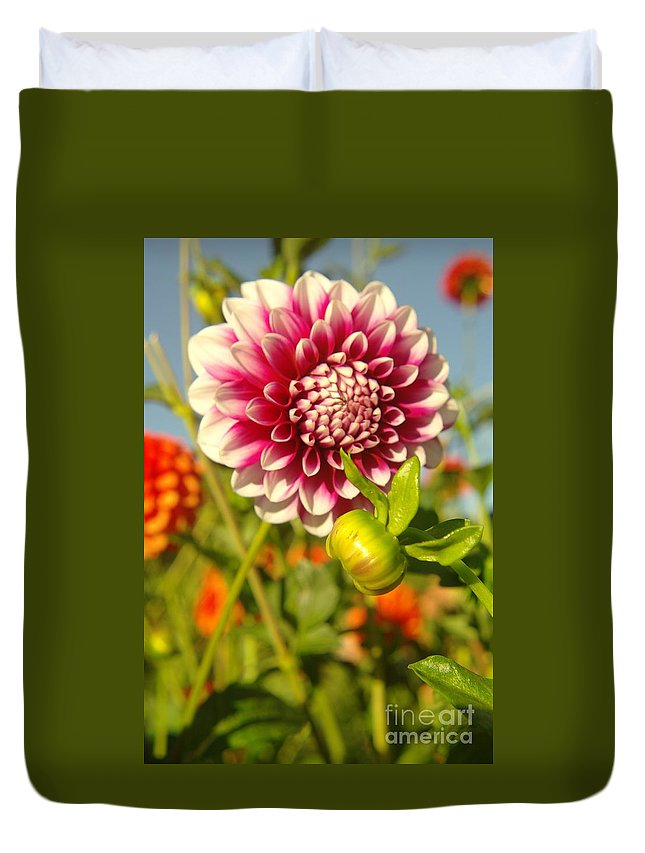 Flowers Duvet Cover featuring the photograph Dalhia In Bloom by Jeff Swan