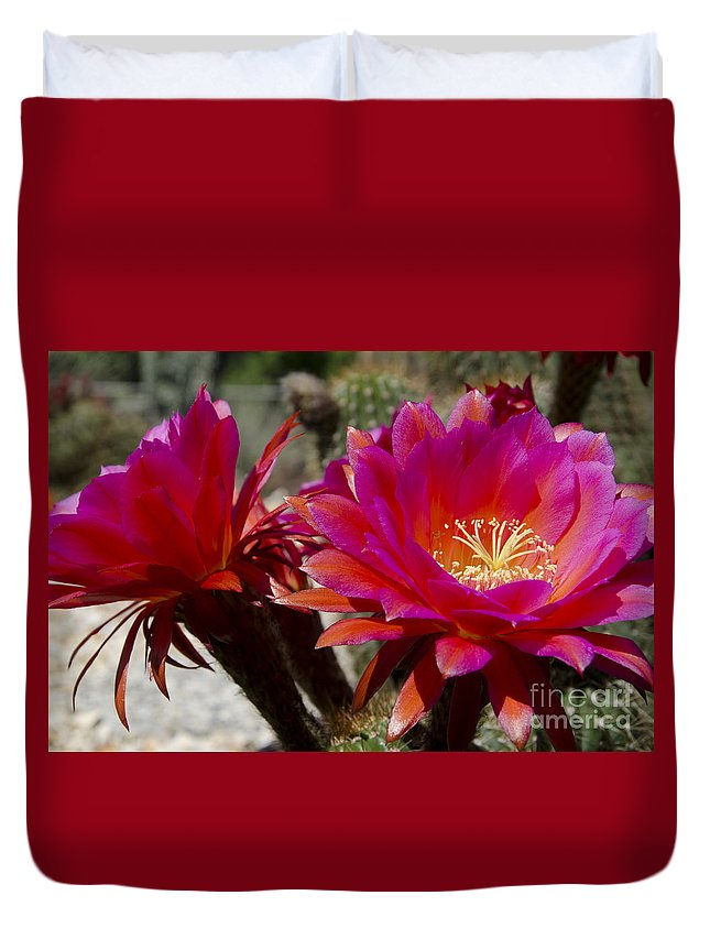 Red Duvet Cover featuring the photograph Dark Pink Cactus Flowers by Jim And Emily Bush
