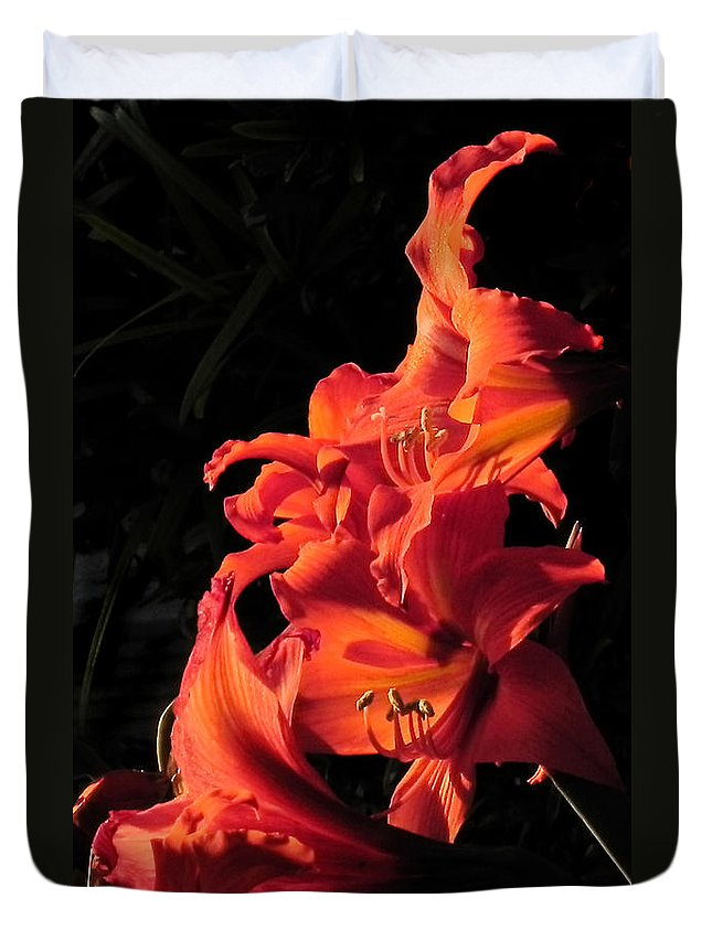 Flowers Duvet Cover featuring the photograph Day Lily Flame by Francesa Miller