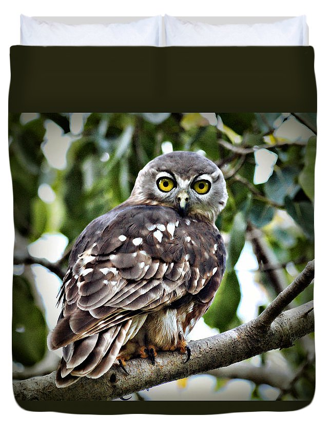 Barking Owl Duvet Cover featuring the photograph Daylight Shy by Douglas Barnard