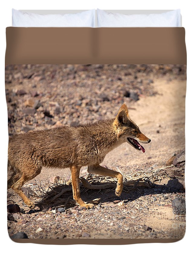 Coyote Duvet Cover featuring the photograph Death Valley Coyote by Mike Dawson