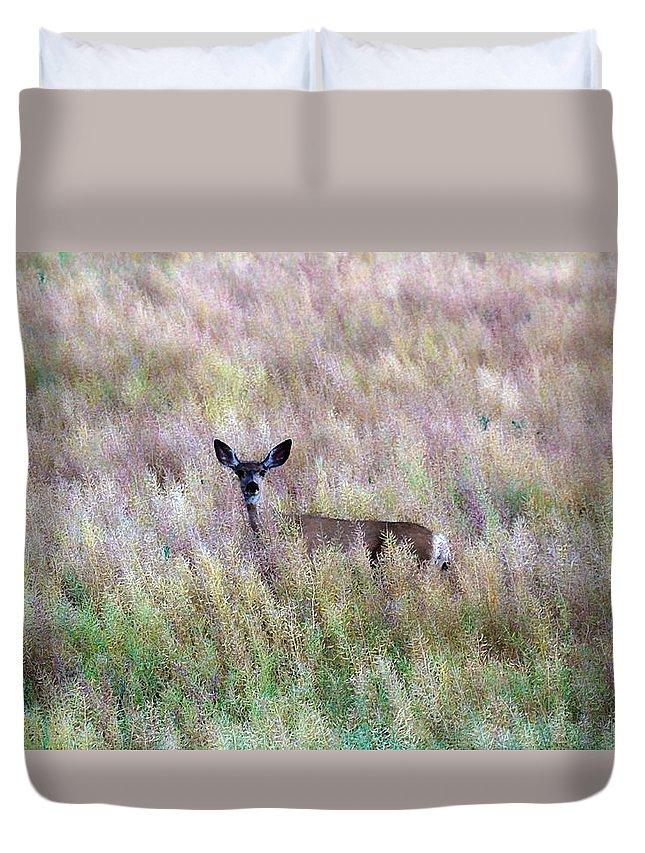 Mule Deer Duvet Cover featuring the photograph Deer Colors by Steve McKinzie