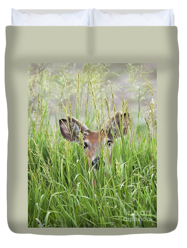 Deer Duvet Cover featuring the photograph Deer In Hiding by Art Whitton