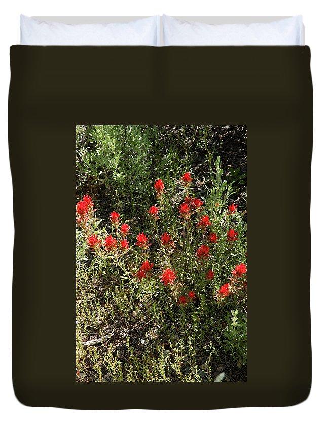 Usa Duvet Cover featuring the photograph Desert Paint Brush by LeeAnn McLaneGoetz McLaneGoetzStudioLLCcom