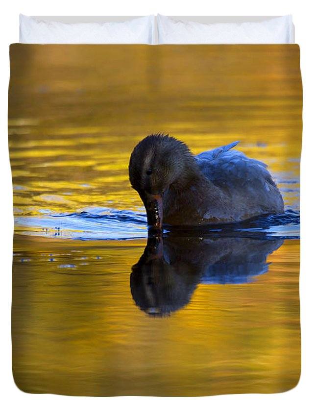 Dipping Duvet Cover featuring the photograph Dipping In Gold by Mike Dawson