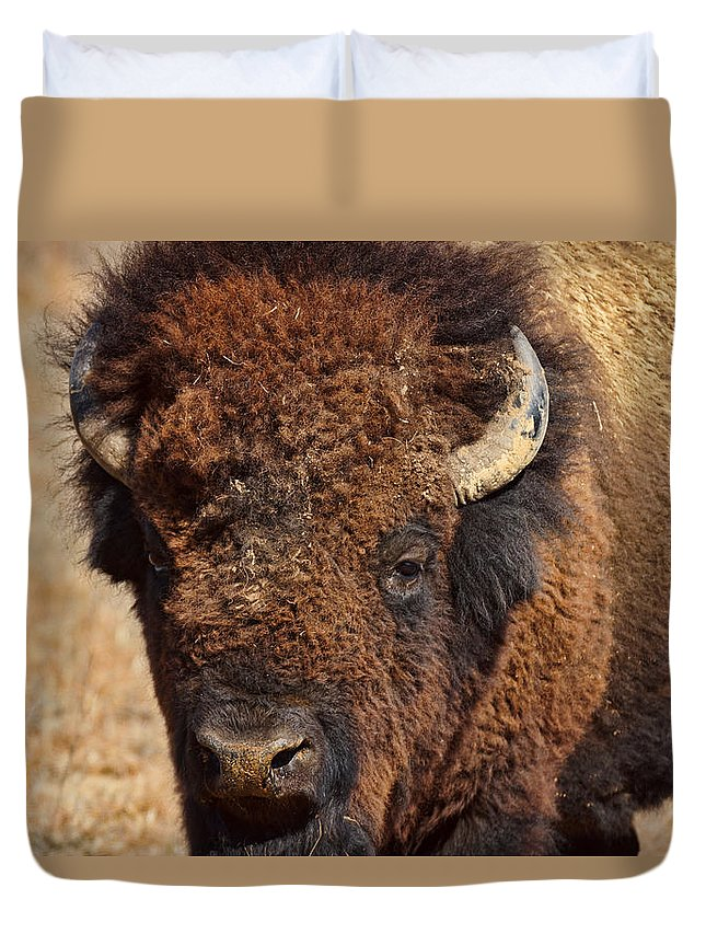 dirty Nose Duvet Cover featuring the photograph Dirty Nose by Alan Hutchins