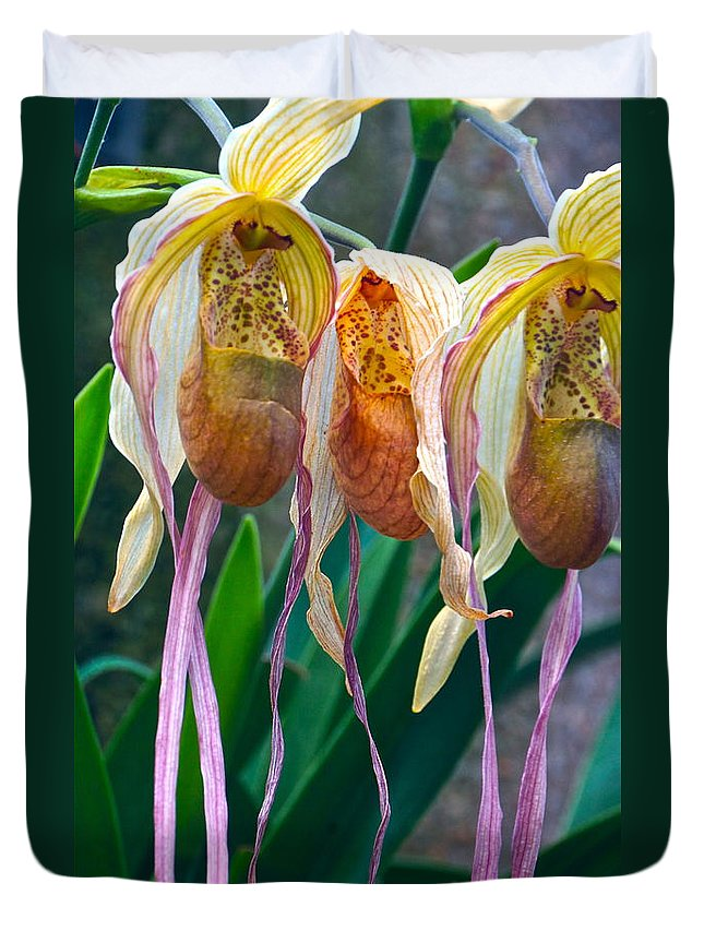 Orchids Duvet Cover featuring the photograph Divas by Byron Varvarigos
