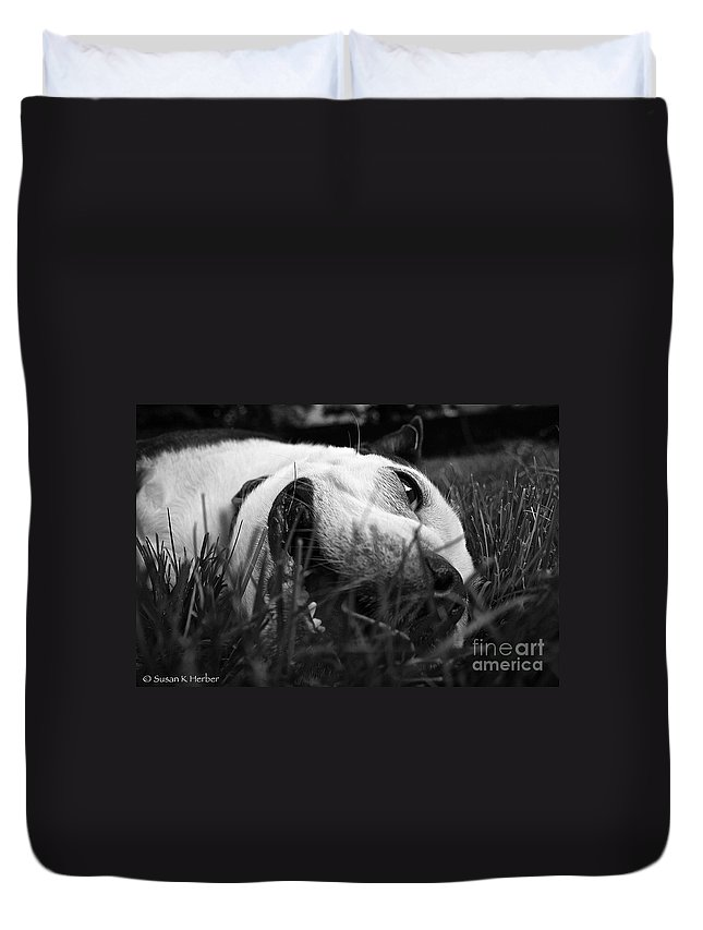 Animal Duvet Cover featuring the photograph Dog Days Of Summer by Susan Herber