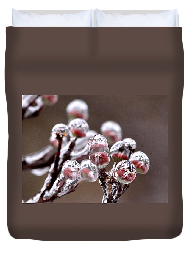 Plants Duvet Cover featuring the photograph Dogwood Blooms - Sealed In Ice by Travis Truelove