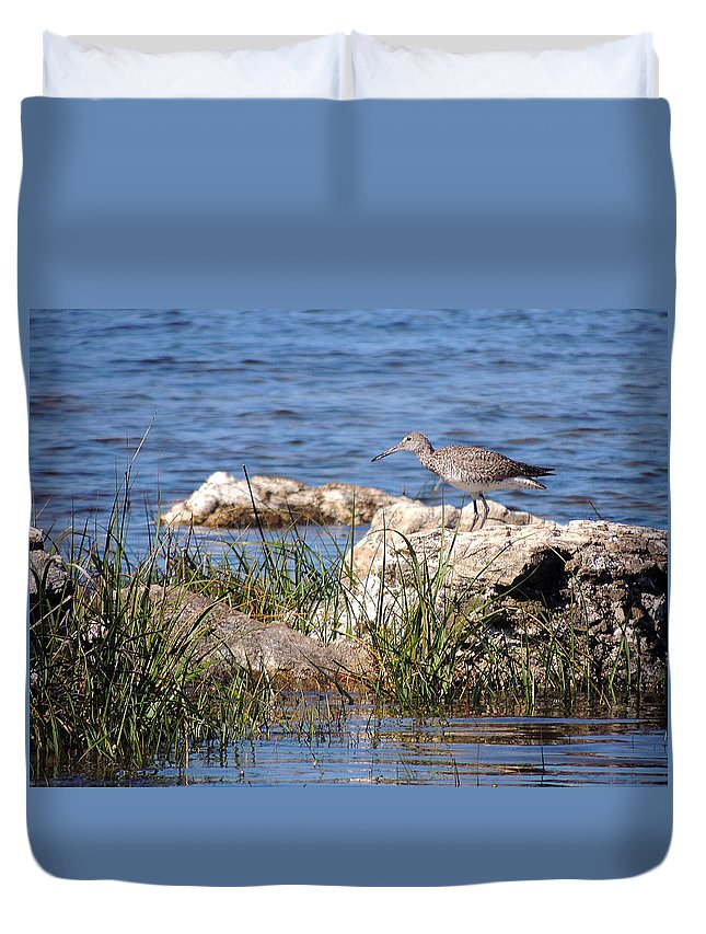 Birds Duvet Cover featuring the photograph Dowitcher by Marilyn Holkham