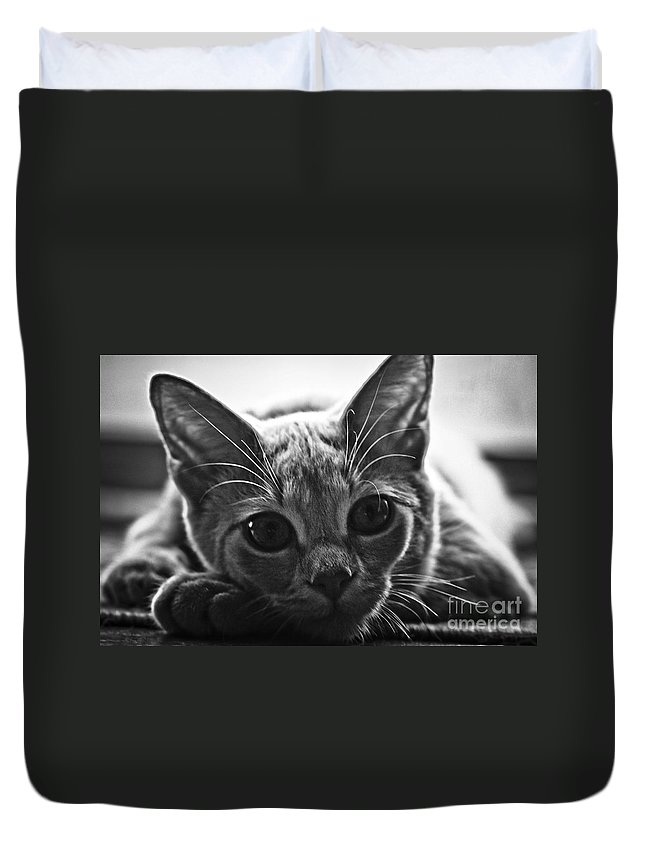 Kitten Duvet Cover featuring the photograph Downtime by Kim Henderson