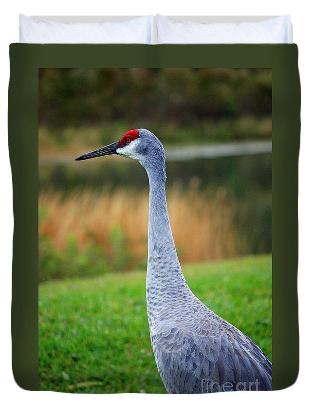 Sandhill Crane Duvet Cover featuring the photograph Dreaming Sandhill Crane by Carol Groenen