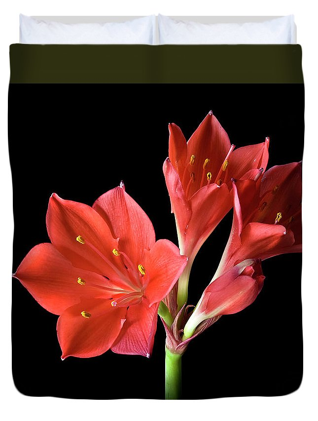 Flower Duvet Cover featuring the photograph Dwarf Amaryllis by Endre Balogh