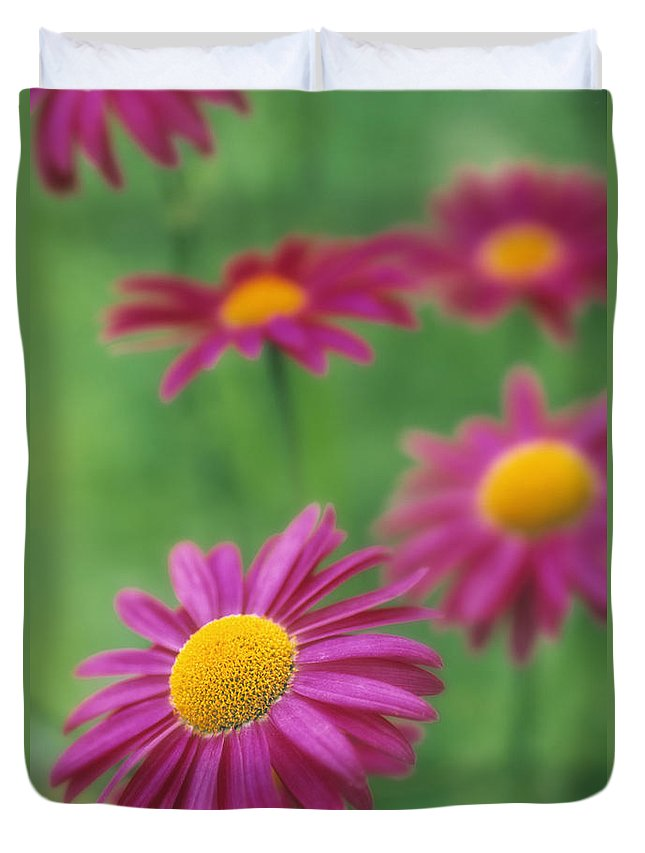 Light Duvet Cover featuring the photograph Echinacea by Darwin Wiggett