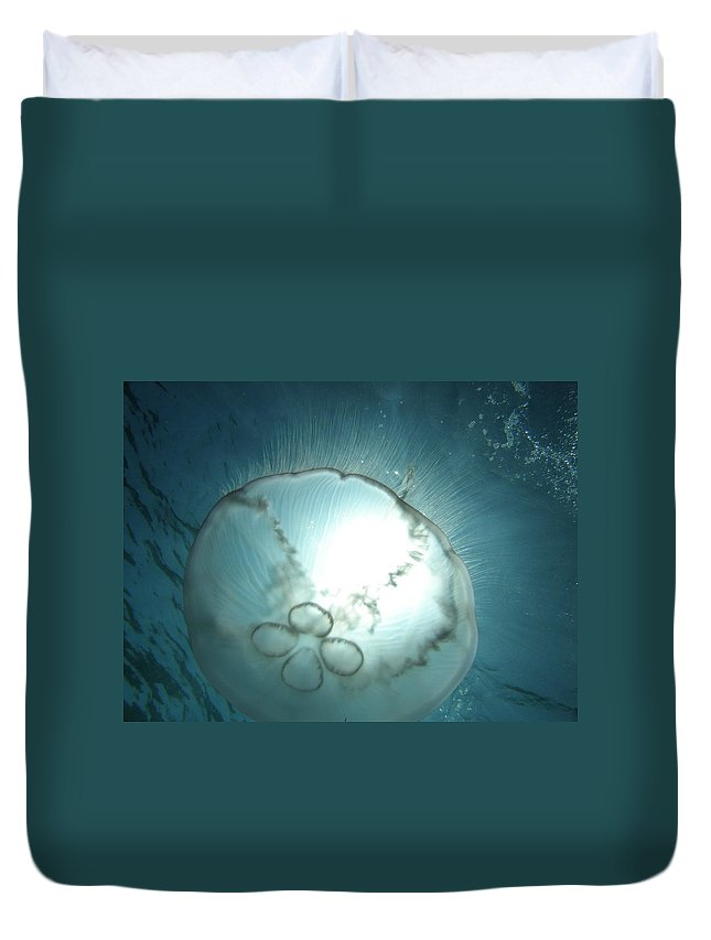 Nature Ocean Wildlife Blue Duvet Cover featuring the photograph Eclipse by Kimberly Mohlenhoff