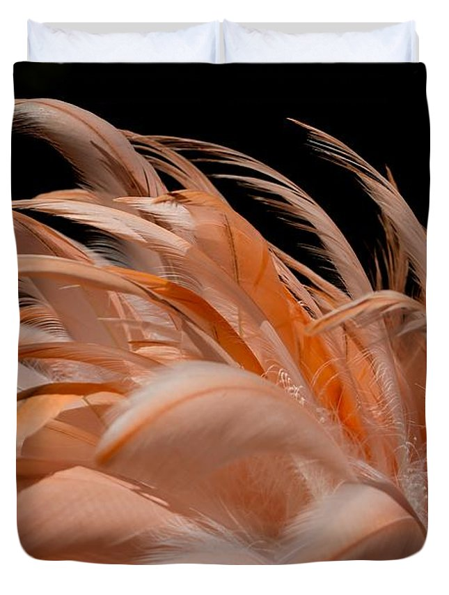 Flamingo Duvet Cover featuring the photograph Fabulous Flamingo Feathers by Sabrina L Ryan